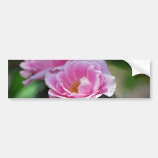 Pretty pink roses bumper sticker