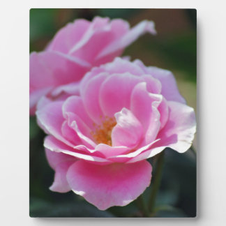 Pretty pink roses plaque