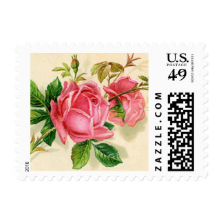 Pretty pink roses postage stamp