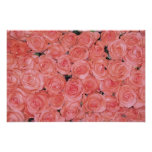 Pretty Pink Roses Posters and Prints