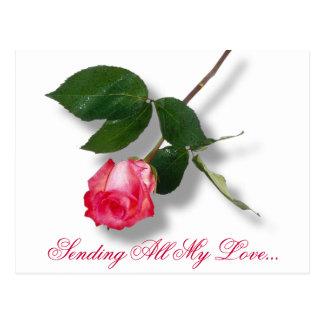 Pretty pink single rose postcard