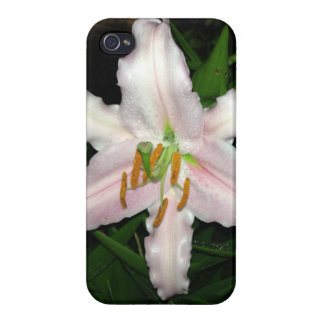 Pretty Pink Stargazer Lily At Night Cover For iPhone 4