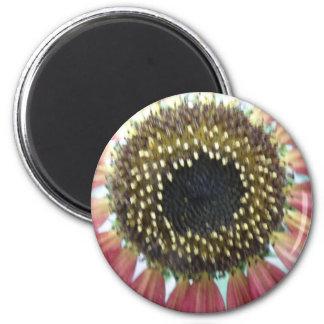 Pretty Pink Sunflower Magnet
