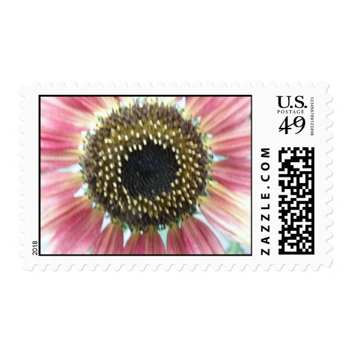 Pretty Pink Sunflower Postage Stamps