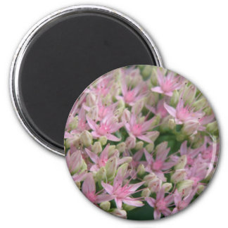 Pretty Pink Tropical Flowers Magnet
