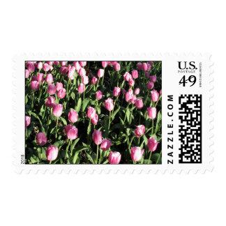 Pretty pink tulip garden stamp