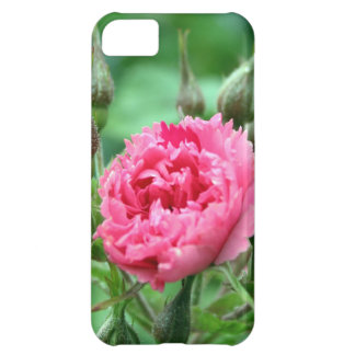pretty pink wild rose buds and  flower iPhone 5C case