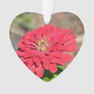 Pretty Pink Zinnia Flower