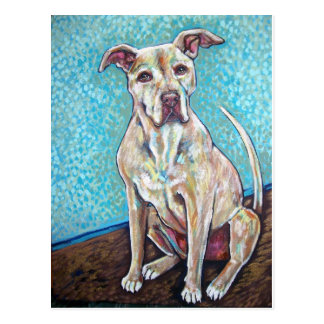 pretty pitty post cards