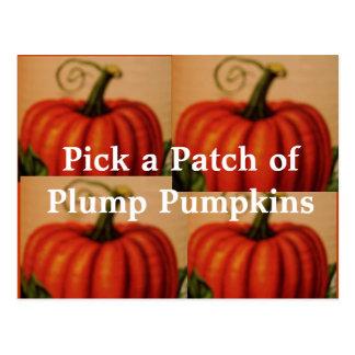 Pretty Plumpkins Postcard. Postcard