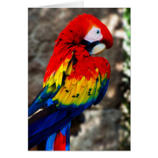 Pretty Polly Parrot Card