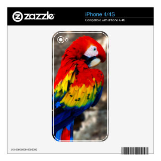 Pretty Polly Parrot Decals For The iPhone 4
