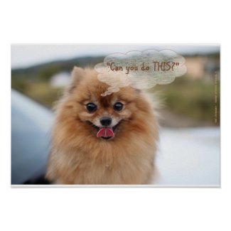 """Pretty Pomeranian, """"Can You Do THIS?"""""""