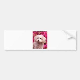Pretty Poodle Bumper Sticker