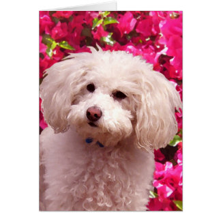 Pretty Poodle Card
