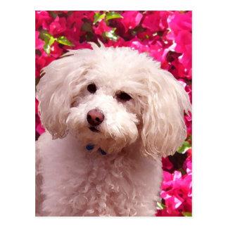 Pretty Poodle Postcard