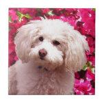 Pretty Poodle Small Square Tile