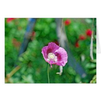 Pretty Poppy Card