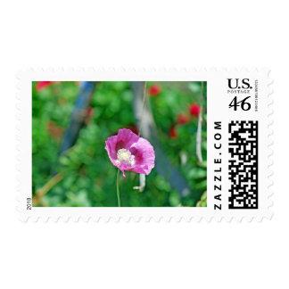 Pretty Poppy Postage Stamp