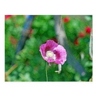 Pretty Poppy Postcard