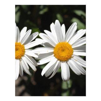 Pretty pure white daisy flowers letterhead