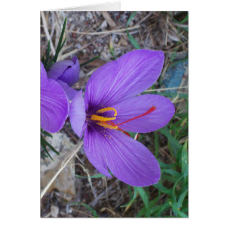 Pretty Purple Crocus Cards