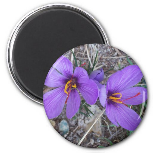 Pretty Purple Crocus Fridge Magnet