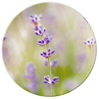 pretty purple flowers nature natual soothing porcelain plates