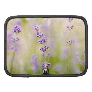 pretty purple flowers nature natual soothing planner
