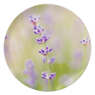 pretty purple flowers nature natual soothing dinner plates