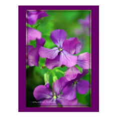 Pretty Purple Flowers - Postcard