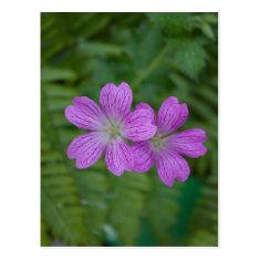 Pretty Purple Flowers Postcard Post Card
