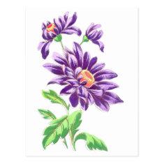 Pretty Purple Flowers Postcards