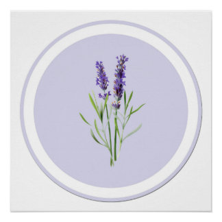 Pretty Purple Lavender Flowers Poster