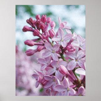 Pretty Purple Lilacs Poster