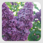 Pretty Purple Lilacs Square Sticker at Zazzle