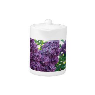 Pretty Purple Lilacs