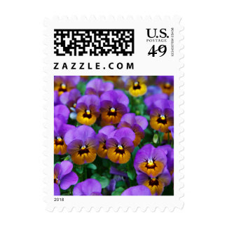 Pretty Purple Pansies in a Field Postage