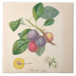 """Pretty Purple Plums, Ceramic Tile, French Accent Tile<br><div class=""""desc"""">Pretty purple plums on ceramic tile with French text,  a vintage botanical image on sturdy high gloss tile,  6 x 6 inches.</div>"""