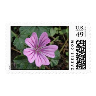 Pretty Purple Wildflower Postage Stamp