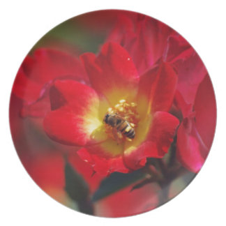 Pretty red and yellow rose and its meaning plate