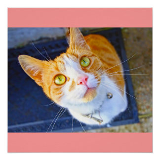 Pretty red cat poster