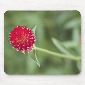 pretty red flower mouse mat