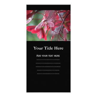Pretty red Japanese maple tree seeds, samara fruit Photo Card