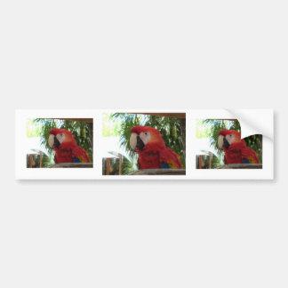 Pretty Red Parrot Bumper Sticker
