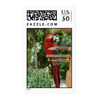 Pretty Red Parrot Postage