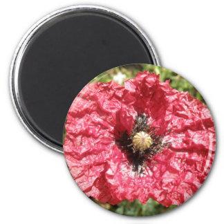 Pretty Red Poppy Flower Macro Magnet