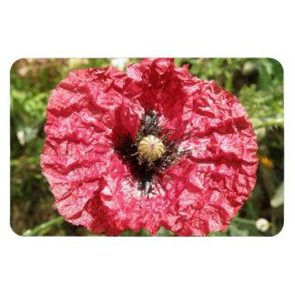 Pretty Red Poppy Flower Macro Premium Magnet