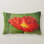 Pretty red poppy flowers pillows