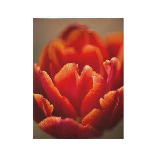 Pretty Red Tulip Petals photo. Nature photography. Wood Poster